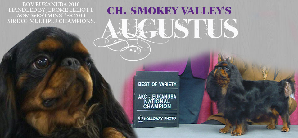 Gus…King Charles Top Winner